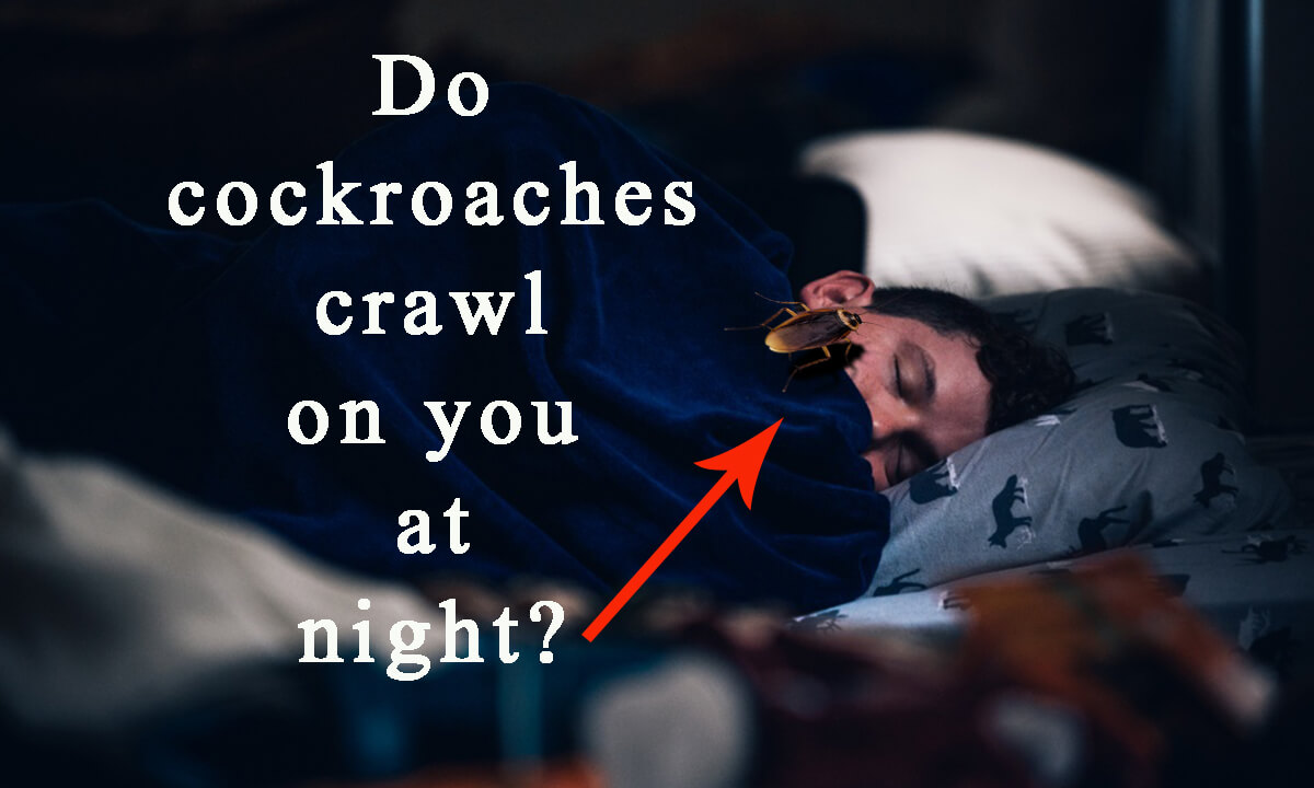 Do cockroaches crawl on you at night