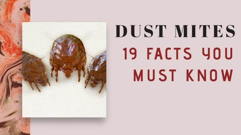 19 Interesting Facts about Dust Mites You must Know