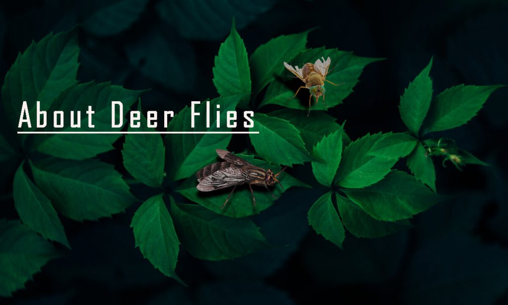 Homemade Traps to Get Rid of Deer Flies