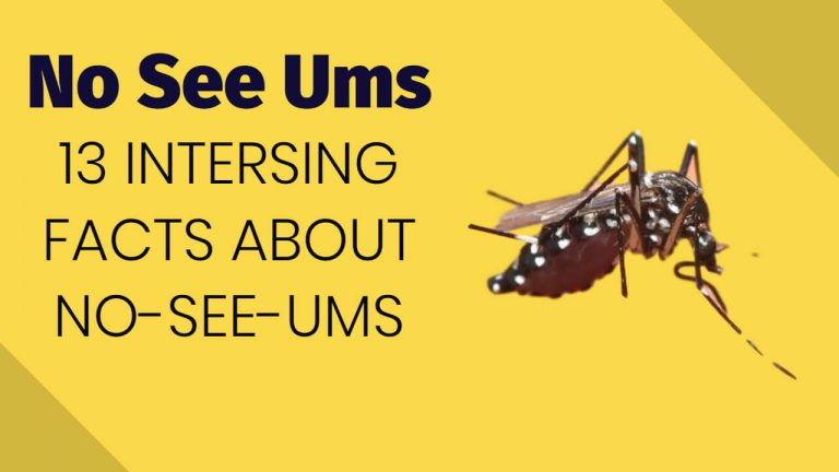 What are No See Ums? Learn 13 Interesting Facts about No-See-Ums
