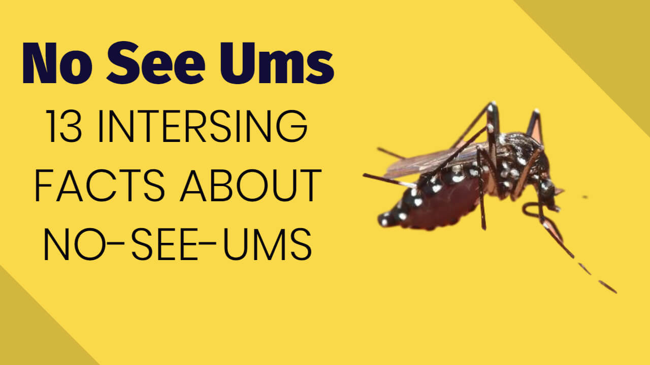 13 Facts about No See Ums
