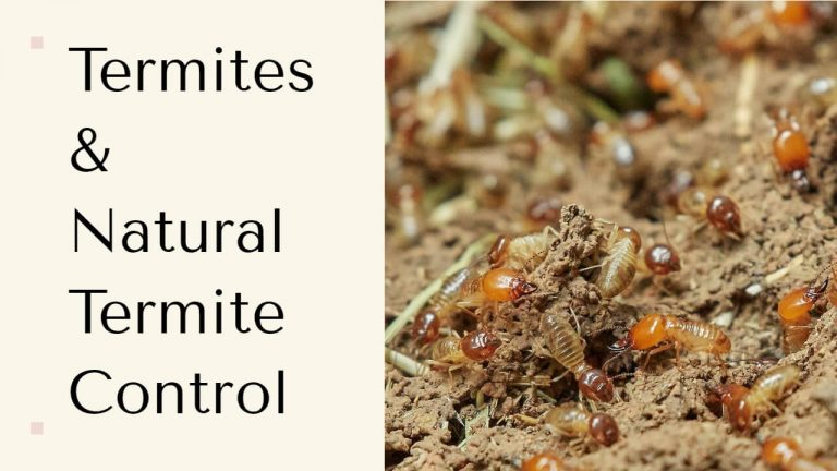 Types of Termites | How to get rid of Termites Naturally