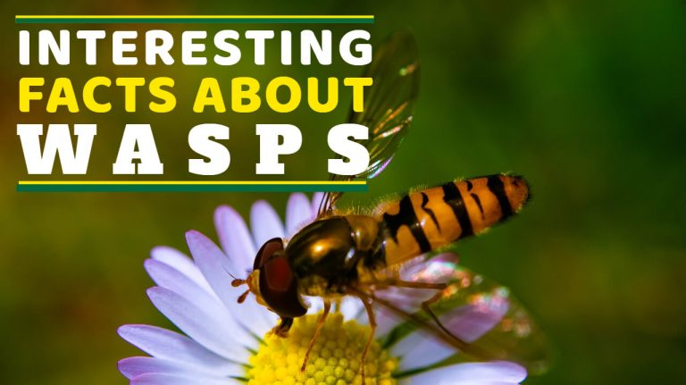 15 Facts about Wasps [Unique Nature & Eating Habits] | Wasp Vs Bee
