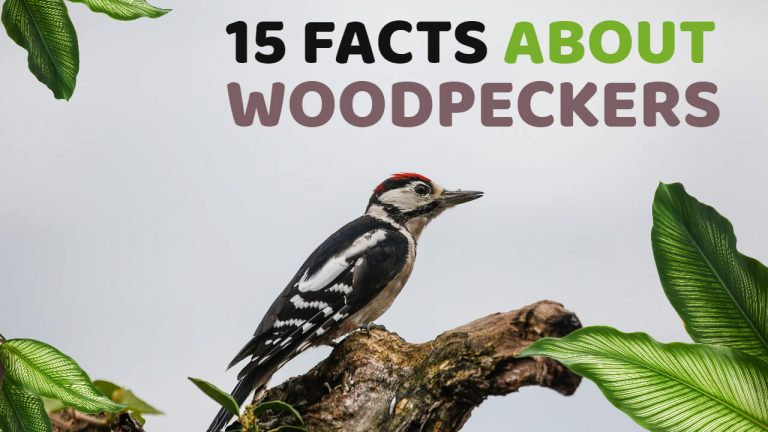 15 Facts About Woodpeckers [Eating Habits, Lifespan and More]