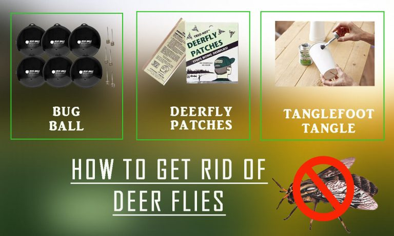 How to Get rid of Deer Flies | Top 5 Best Deer Fly Repellents & Buyer Guide