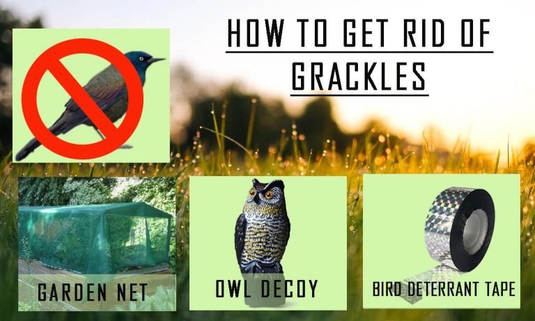 How to Get rid of Grackles & Starlings | Popular Methods and Products