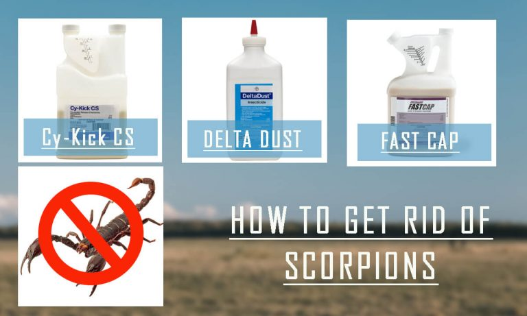 How to Get rid of Scorpions? Top 5 Scorpion Repellents & Buyer Guide