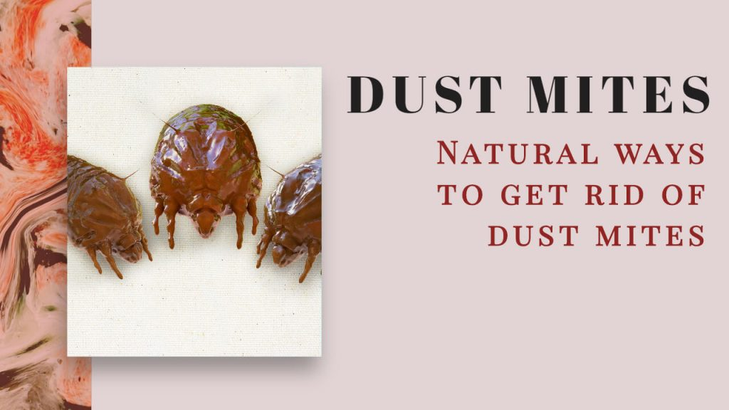 About Dust Mites and Home Remedies to Get rid of Dust Mites