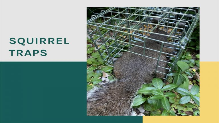 Best Squirrel Trap | Top 5 Squirrel Traps [Review & User Feedback]