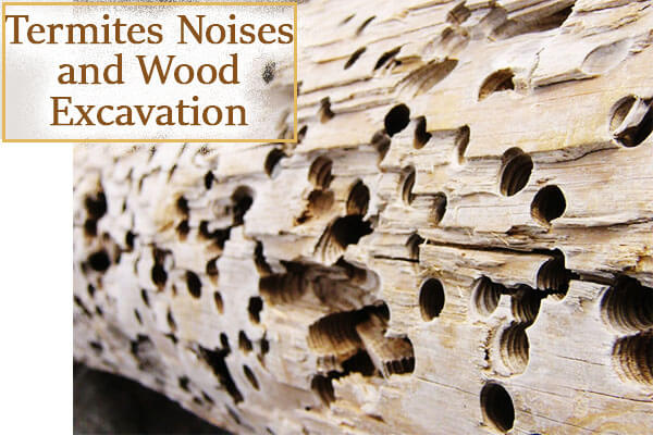 Termites Noises and Wood Excavation
