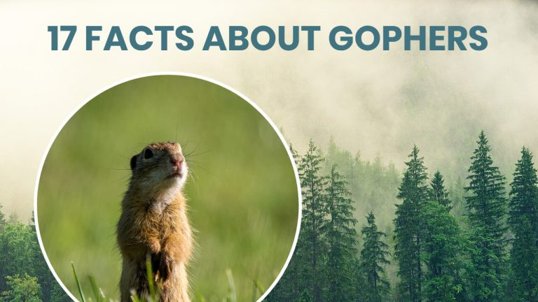 17 Facts About Gophers | Different Types of Gophers and More