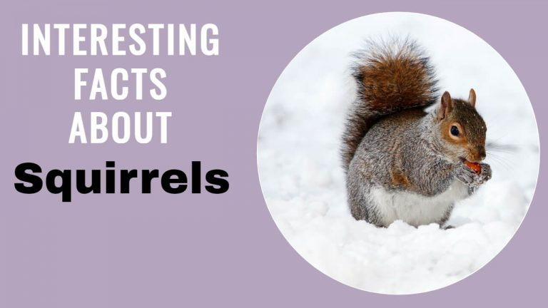 21 Interesting Facts About Squirrels [Why do Dogs hate Squirrels?]