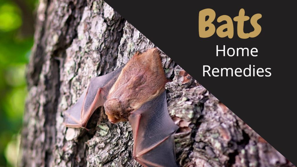 Home Remedies to Get Rid of Bats