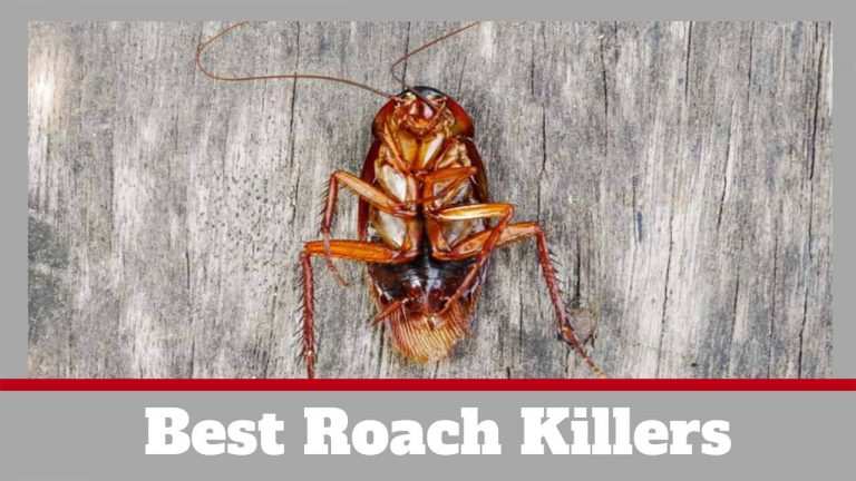 Best Roach Killer | 5 Best Roach Sprays to Get rid of Roaches
