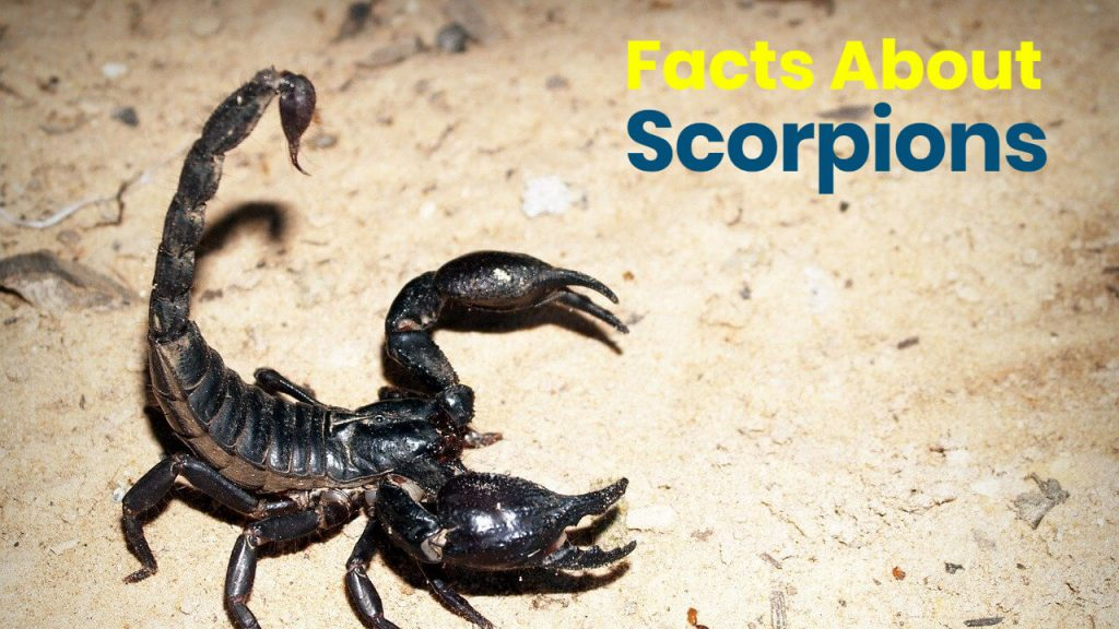 interesting facts about scorpions