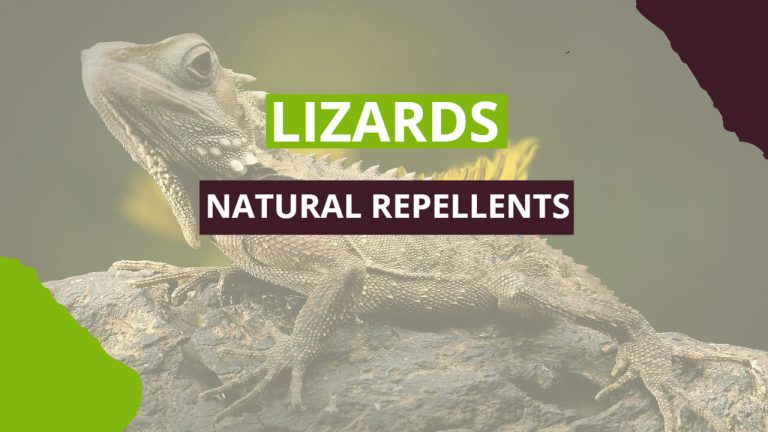 Types of Lizards | 12 Best Natural Lizard Repellents