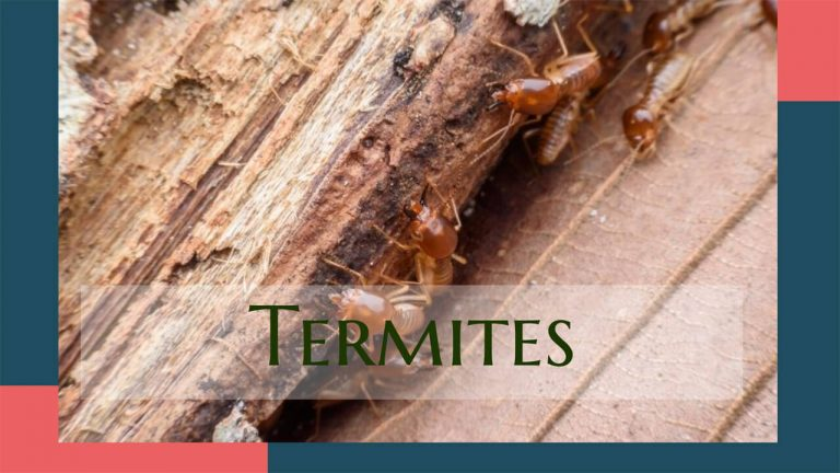 Best Termite Killer | Termite Treatment for Soil & Wood | Top 6 Repellents
