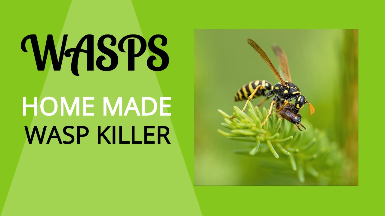 About Wasps | What to do for a Wasp Bite? Homemade Wasp Killer