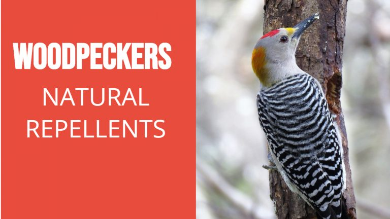 About Woodpeckers | Best Natural Woodpecker Repellent