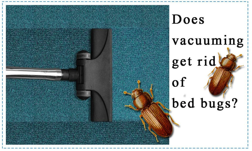 does vacuuming get rid of bed bugs