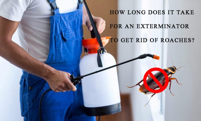 How Long Does It Take for an Exterminator to Get rid of Roaches?