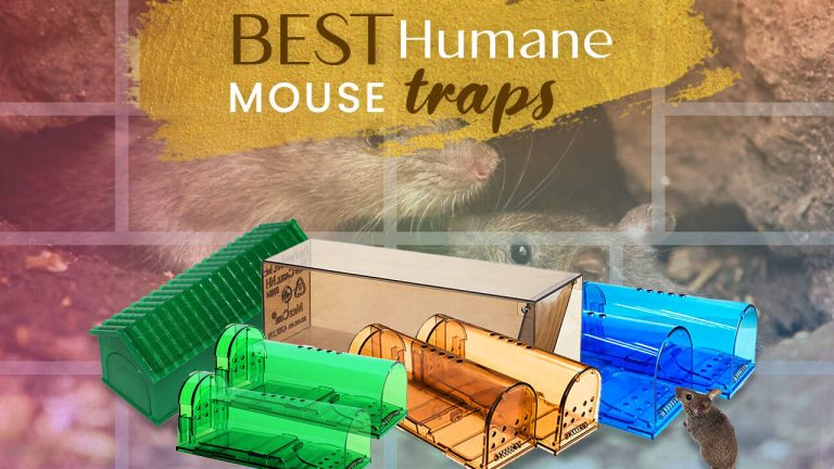 Top 5 Best Humane Mouse Traps | How to use Humane Mouse Trap