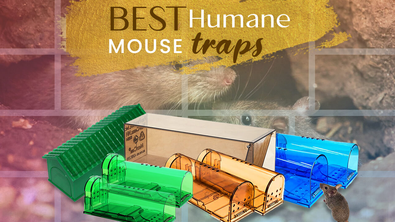 Top 5 Best Humane Mouse Traps