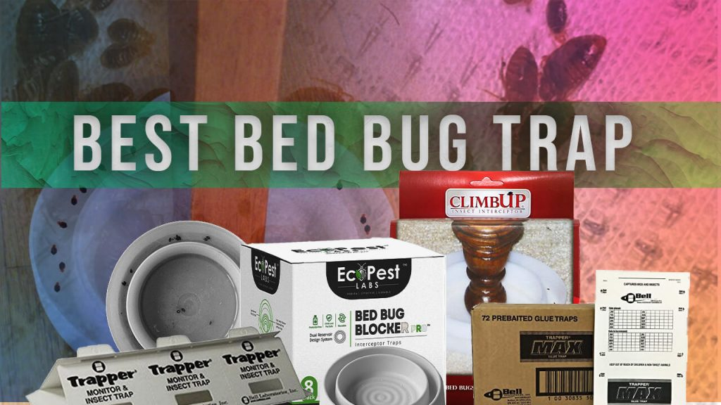 best bed bug trap