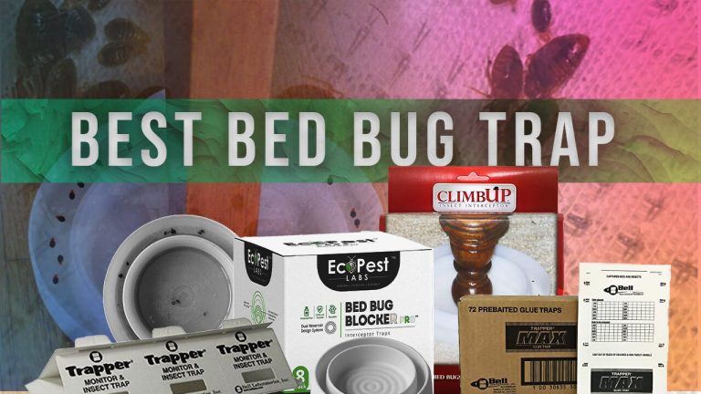 Top 5 Best Bed Bug Traps | Review & User Feedback | Buyer Guide