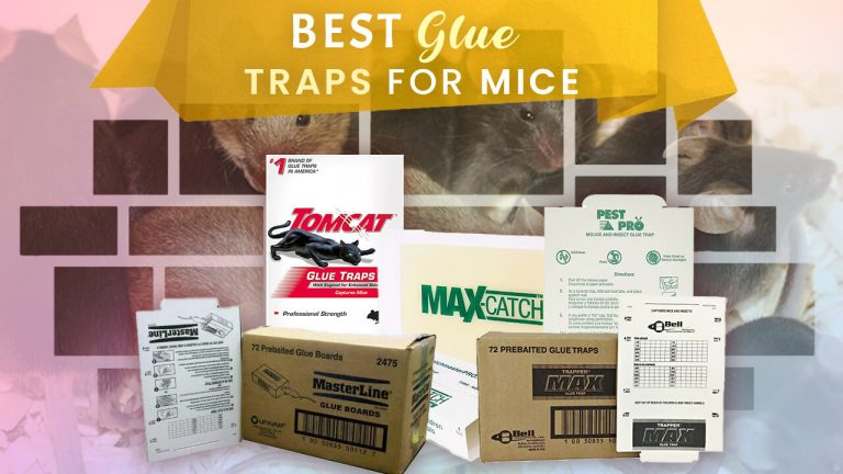 Best Mouse Glue Trap | Top 5 Picks | Buyer Guide & User Reviews