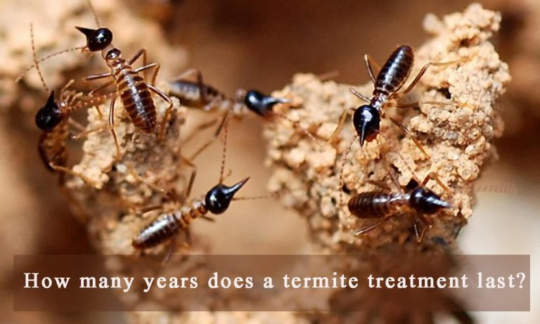 How Long Does a Termite Treatment Last?