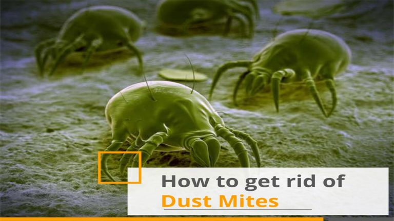 How to Get rid of Dust mites | Top 5 Best Dust Mite Killers