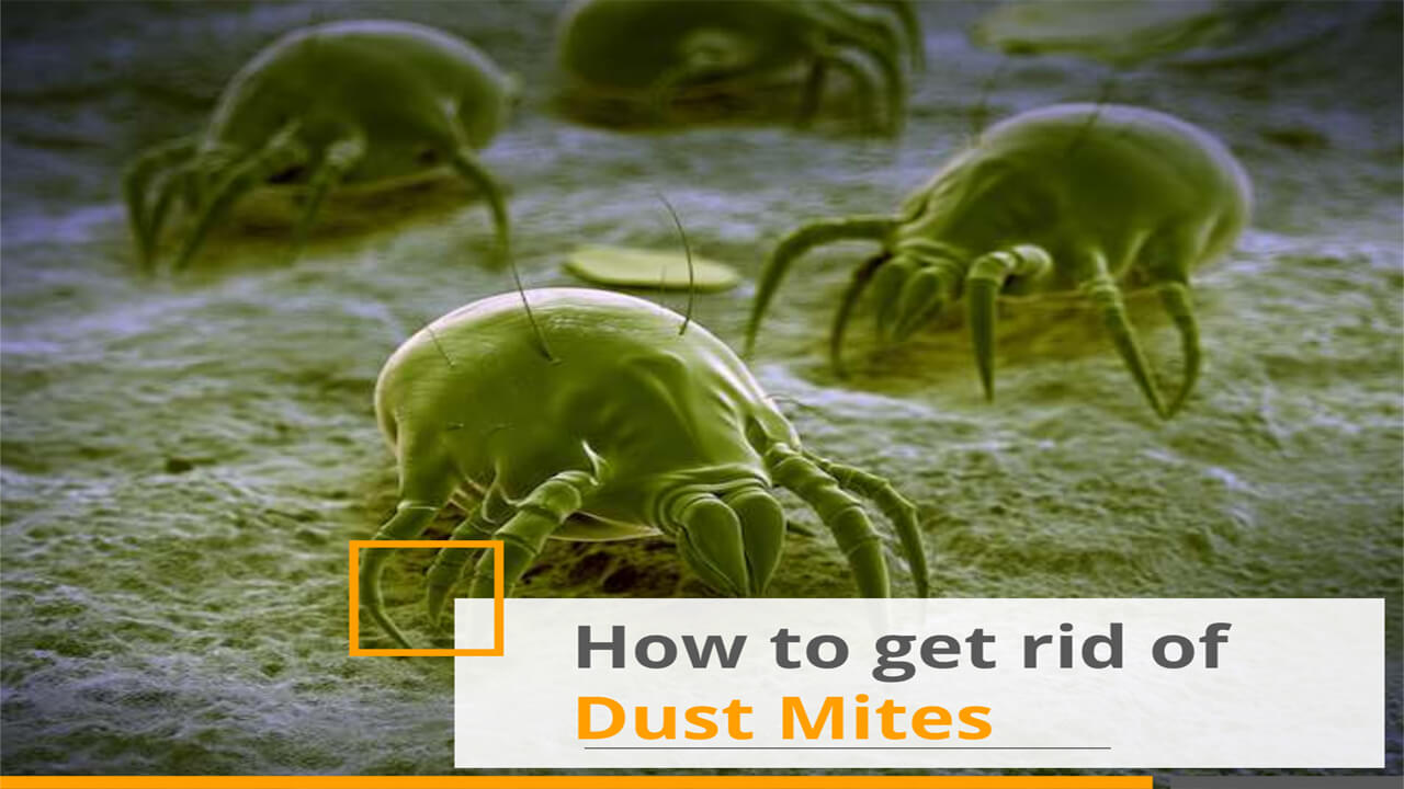 How to Get rid of Dust mites