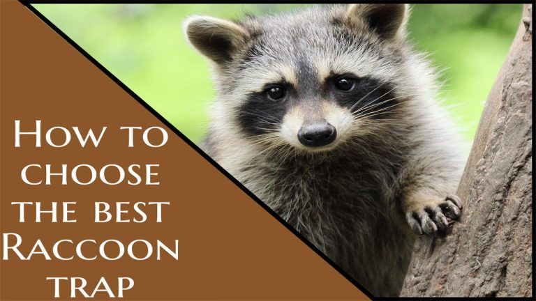 How to Get rid of Raccoons | Top 10 Best Raccoon Traps & Buyer Guide