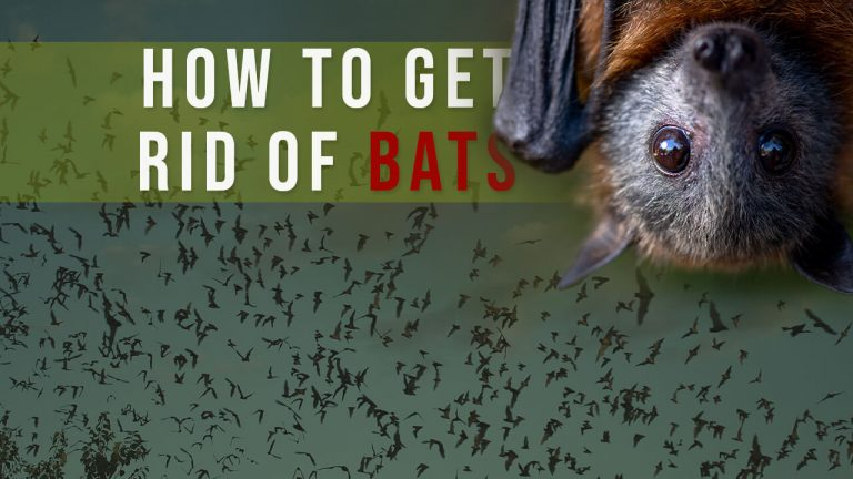 How to Get rid of Bats? Top 5 Best Bat Repellents & Buyer Guide