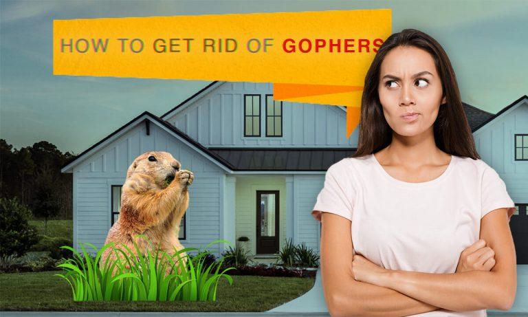How to Get rid of Gophers | Top 8 Best Gopher Traps to Catch them Alive