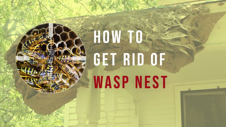 How to Get rid of Wasps? Top 5 Best Wasp Repellents
