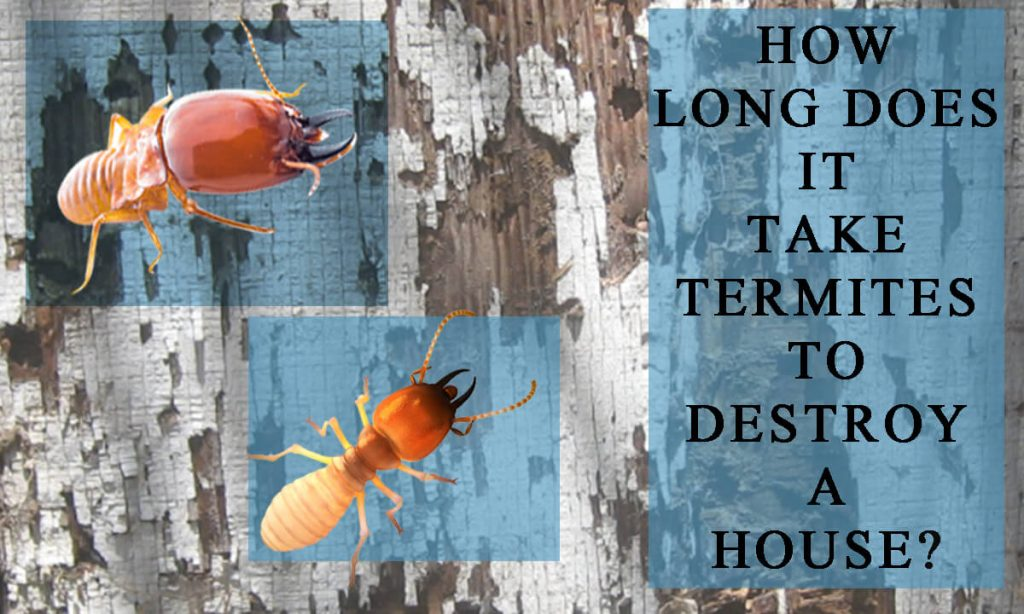 How Long Does It Take Termites to Destroy a House