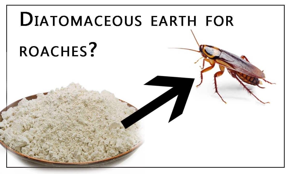 Diatomaceous Earth for Roaches