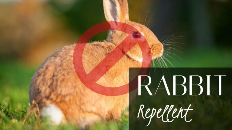 How to Get rid of Rabbits? Top 6 Best Rabbit Repellents & Usage Instructions