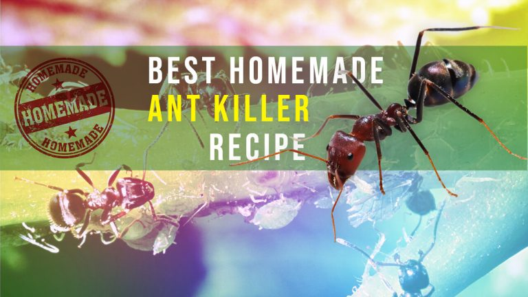 Top 10 Easy, Safe and Most Effective Homemade Ant Killers :  Recipe & Usage