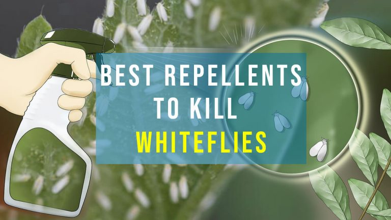 How to Get rid of Whiteflies? Top 5 Best Whitefly Insecticides & Buyer Guide