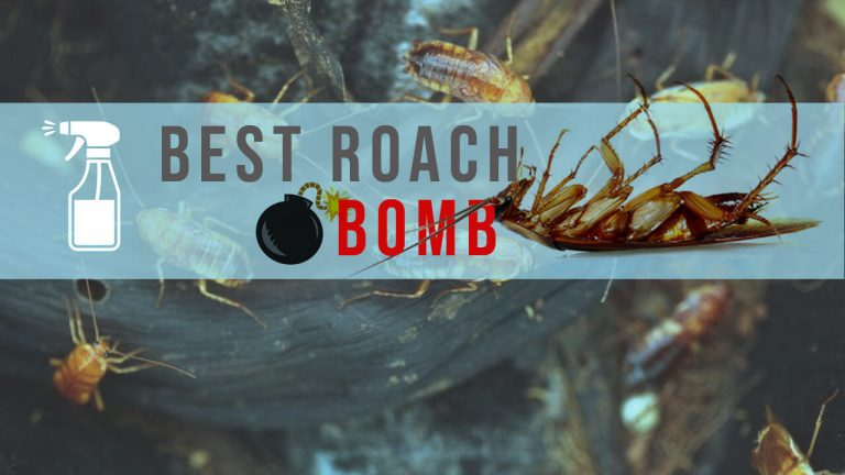 Top 6 Best Roach Bombs to Get rid of Roaches | How does a roach bomb work?