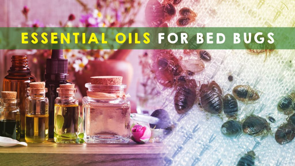 best essential oils for bed bugs