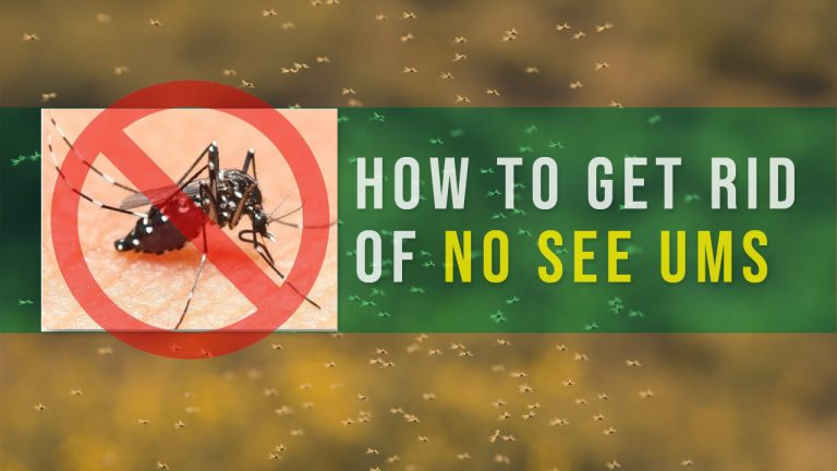 How to Get rid of No See Ums | Top 10 Best No-See-Ums Repellents