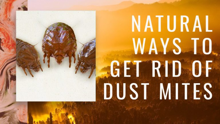 11 Natural Ways & Home Remedies to Get rid of Dust Mites