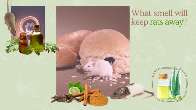 What smell will keep rats away? 9 Different Smells Rats and Mice Hate