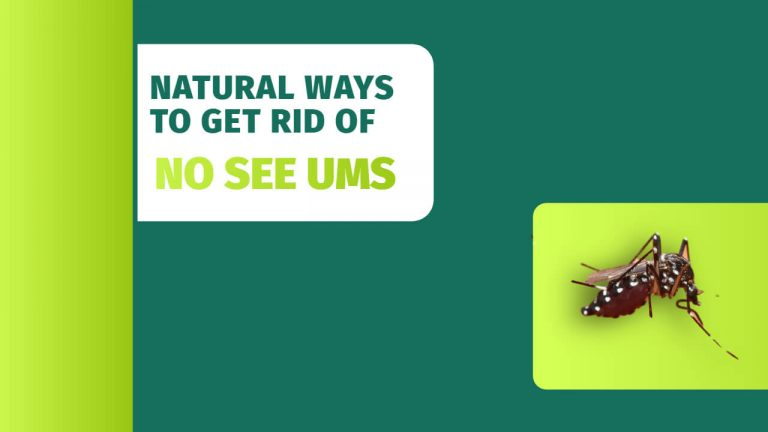 7 Natural Ways to Get rid of No See Ums | How to Prevent No-See-Ums?