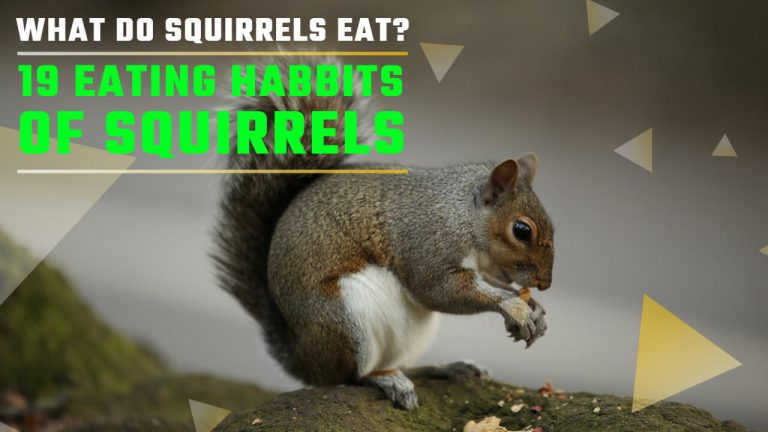 What do Squirrels Eat? [19 Eating Habits of Squirrels – EXPLAINED]