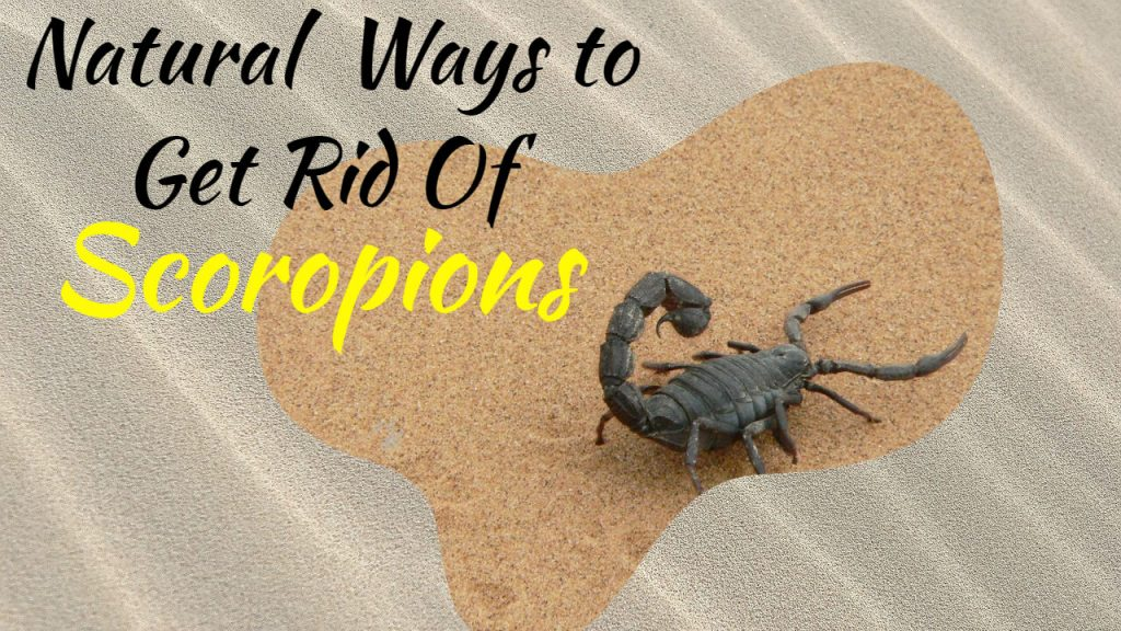 natural ways to get rid of scorpions